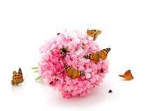 Mariposa, mariquitas y abejorro en las flores rosadas Foto de archivo