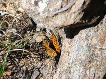 Mariposa marrón hermosa - una foto 1 Fotos de archivo libres de regalías