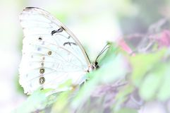 Mariposa, monocromo blanco-en-blanco Imagen de archivo