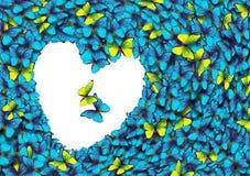 Mariposa Morpho Alas de una mariposa Morpho Fotografía de archivo