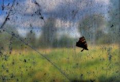 Mariposa muerta Fotos de archivo
