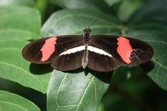 Mariposa multicolora Fotografía de archivo