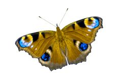 Mariposa multicolora hermosa con las alas abiertas La mariposa se aísla en la opinión superior del fondo blanco, ninguna sombra fotos de archivo libres de regalías