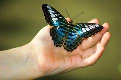 Mariposa negra y azul en la mano imagen de archivo libre de regalías