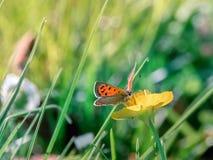 Mariposa paciente Imagenes de archivo