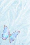 Mariposa para el vidrio de congelación Fotos de archivo libres de regalías