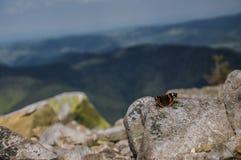 Mariposa que admira la majestad de las montañas foto de archivo libre de regalías