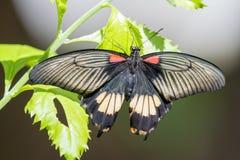 Mariposa que admite un poco de sol Fotografía de archivo libre de regalías