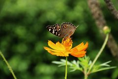 Mariposa que besa la flor imagen de archivo libre de regalías