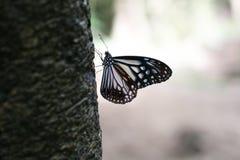 Mariposa que descansa sobre el árbol Imagen de archivo libre de regalías