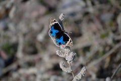 Mariposa que descansa sobre la licencia del árbol Imagen de archivo libre de regalías