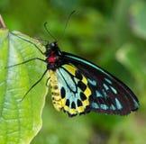 Mariposa que descansa sobre una hoja imágenes de archivo libres de regalías
