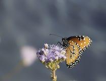 Mariposa que le mira Fotos de archivo