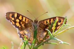 Mariposa que mira desde arriba en el río Fotos de archivo