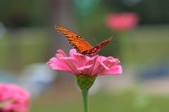 Mariposa que recolecta el néctar Foto de archivo