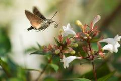 Mariposa que se acerca a una flor Imagen de archivo