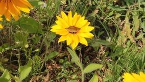 Mariposa que se encarama en una flor metrajes