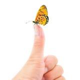 mariposa que se sienta en el dedo Imagenes de archivo