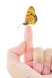 Mariposa que se sienta en el dedo Imagen de archivo libre de regalías