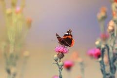 Mariposa que se sienta en puntos de una flor del rosa Imágenes de archivo libres de regalías