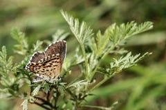 Mariposa que se sienta en un primer verde de la rama foto de archivo