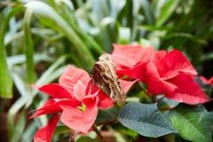 Mariposa que se sienta en una flor de la orquídea Foto de archivo