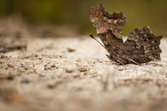 Mariposa que toma el sol Fotografía de archivo