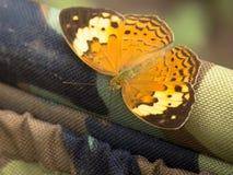 Mariposa rústica Imagenes de archivo