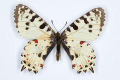 Mariposa rara, adorno del este; en blanco Fotografía de archivo libre de regalías