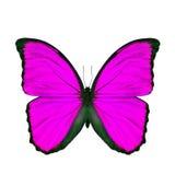 Mariposa rosada exótica aislada en el fondo blanco Imagenes de archivo