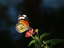 Mariposa sobre una flor Foto de archivo libre de regalías