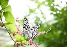Mariposa tropical foto de archivo