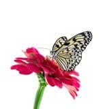 Mariposa tropical Foto de archivo libre de regalías