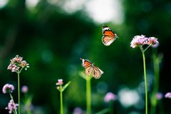 Mariposa tropical en la selva Imágenes de archivo libres de regalías