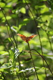 Mariposa tropical entre follaje Fotografía de archivo libre de regalías