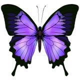Mariposa Vector el ejemplo del color rosado y púrpura hermoso Fotografía de archivo libre de regalías