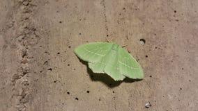 Mariposa verde fotos de archivo