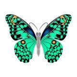 Mariposa verde hermosa brillante Ilustración del vector aislada