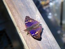 mariposa violeta Imagenes de archivo