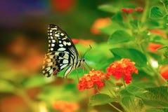 Mariposa viva del vuelo Foto de archivo libre de regalías