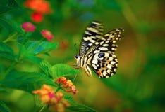 Mariposa viva del vuelo Imagen de archivo libre de regalías