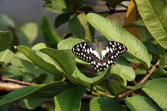 Mariposa y árbol Fotografía de archivo libre de regalías
