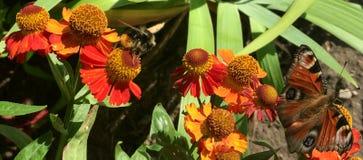 Mariposa y abeja Imágenes de archivo libres de regalías