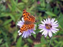 Mariposa y abeja fotografía de archivo