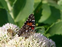 Mariposa y abeja Imagen de archivo