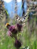 Mariposa y abeja Imagenes de archivo