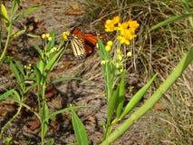Mariposa y amigos Imagen de archivo