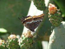 Mariposa y cacto Fotos de archivo libres de regalías