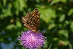 Mariposa y cardo Fotografía de archivo