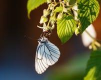Mariposa y dos fallos de funcionamiento Fotografía de archivo